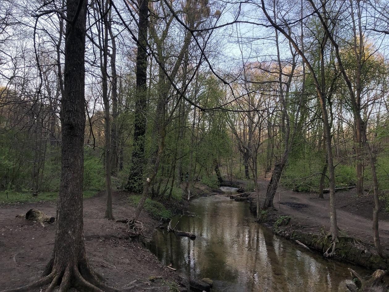 Die Prießnitz fließt knapp 25 Kilometer durch die Dresdner Heide.