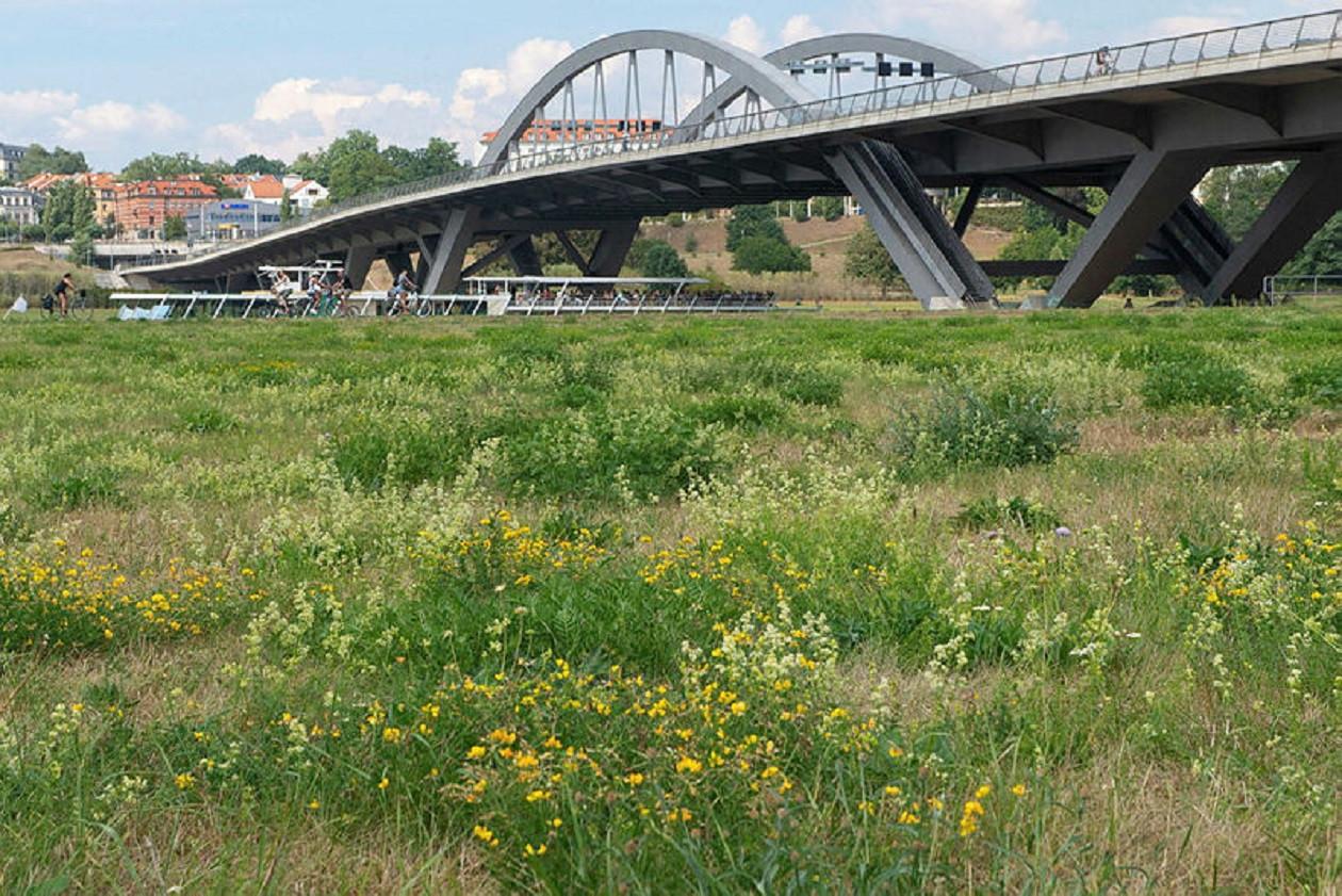 Die Waldschlösschenbrücke ist die jüngste Dresdner Elbbrücke.