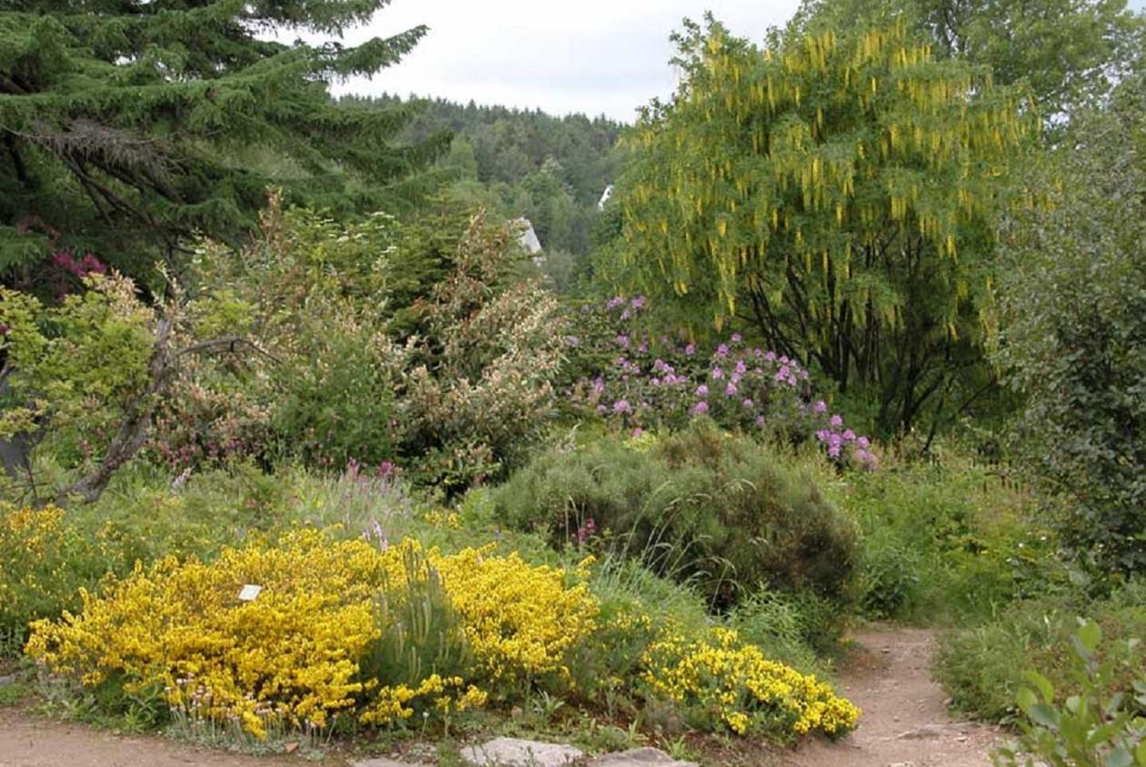 """Geöffnet täglich 9 bis 17 Uhr: <a href=""""https://augusto-sachsen.de/articles/freizeiterlebnis-botanischer-garten-schellerhau-202"""">Botanischer Garten Schellerhau</a>"""