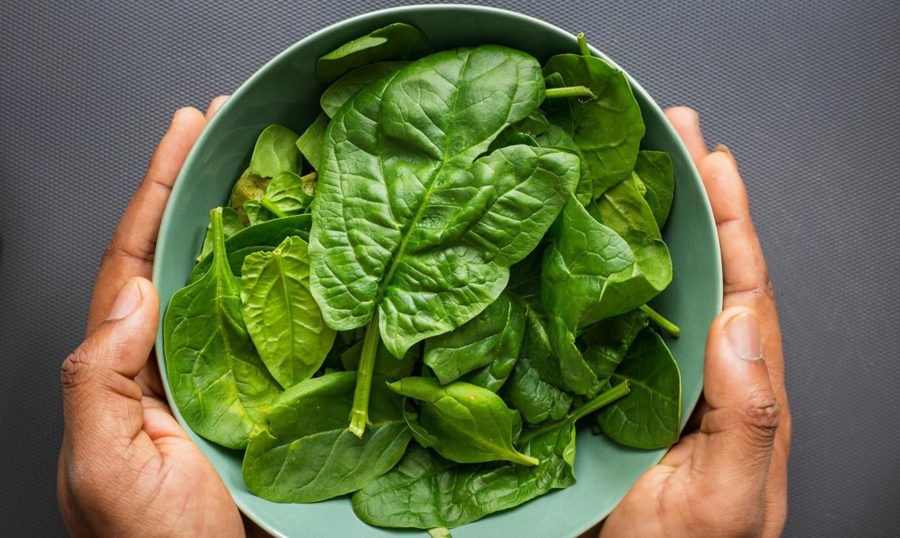 """Rezepte zum Vierten: <a href=""""https://augusto-sachsen.de/articles/gastronomie/starkes-gemuese-3-rezepte-mit-spinat-9980018"""">Starkes Gemüse - dreimal mit Spinat</a>"""
