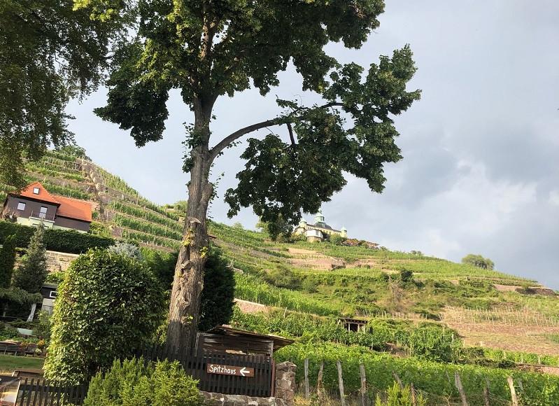 Wanderung an Weinhängen - das ist diesmal unser Tipp.