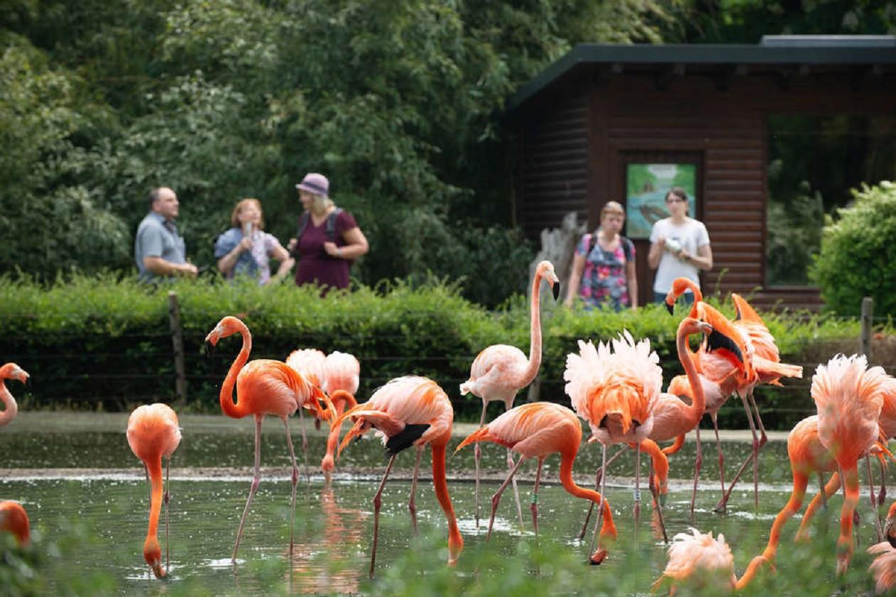 """Geöffnet täglich 8.30 bis 18.30 Uhr: <a href=""""https://www.augusto-sachsen.de/articles/freizeit-erlebnis-zoo-dresden-26345"""">Zoo Dresden</a>"""